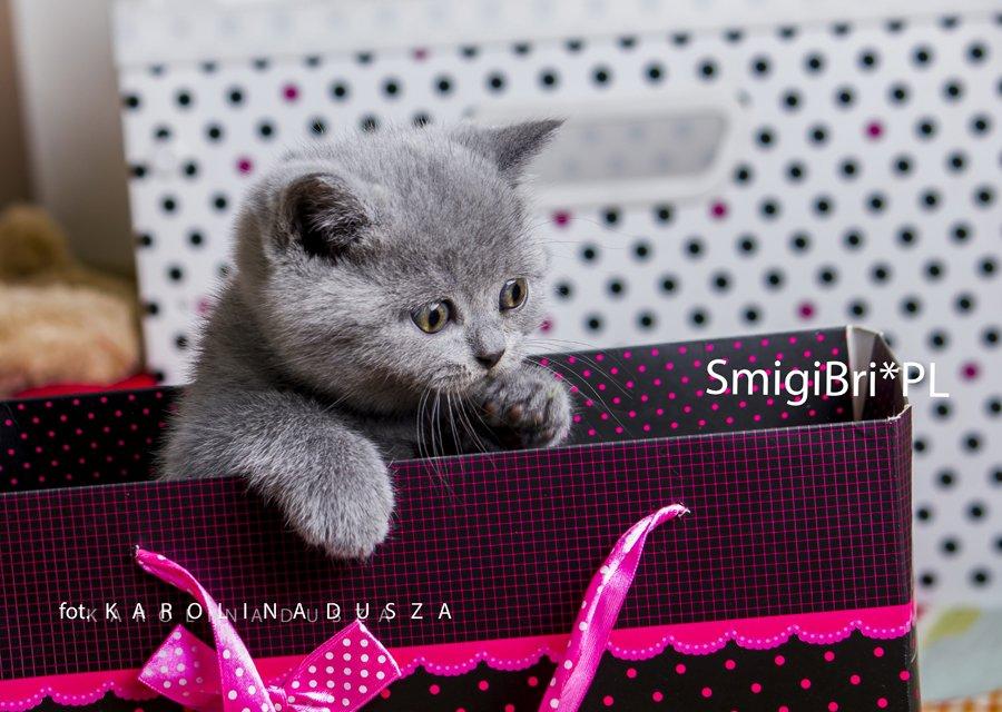 SmigiBri